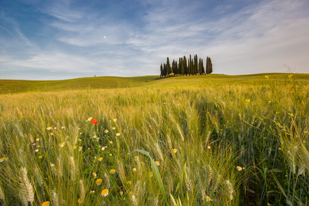 san quirico: Tuscany landscape. Italy