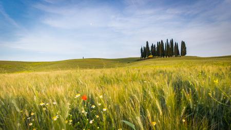 トスカーナの風景。イタリア