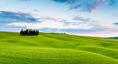 pienza: Tuscany, Val dOrcia, Italy. Cypress trees in green meadow field with clouds gathering meadow field at sunset Stock Photo