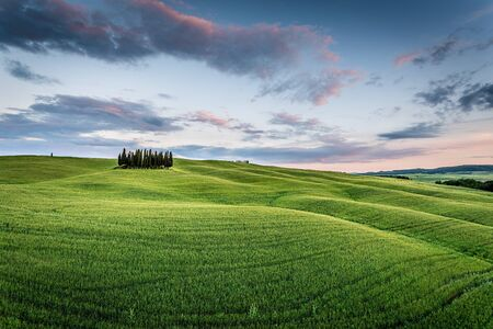 Tuscany, Val dOrcia, Italy. Cypress trees in a green meadow field with clouds gathering
