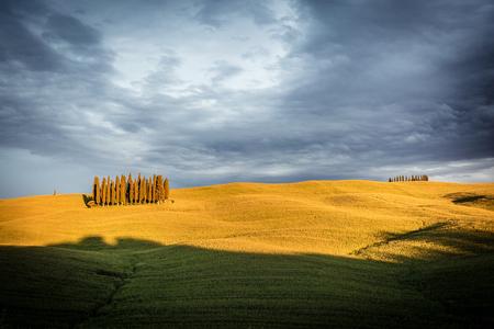トスカーナ、イタリア、ヴァル ド オルチャ。収集雲と黄色の草原フィールドでのヒノキの木