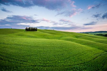 トスカーナ、イタリア、ヴァル ド オルチャ。収集雲と緑の草原フィールドでのヒノキの木 写真素材