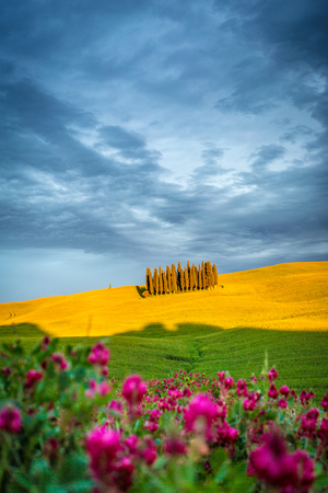Tuscany, Val dOrcia, Italy. Cypress trees in a yellow meadow field with clouds gathering Stok Fotoğraf
