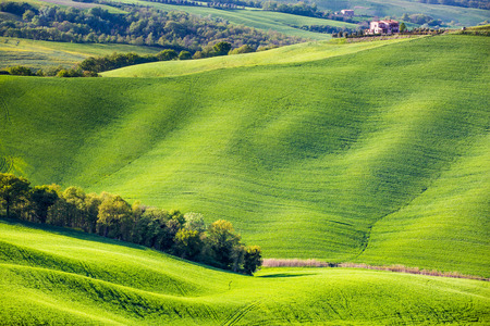 pienza: Val dOrcia, Tuscany, Italy. A lonely farmhouse with cypress trees standing in line in foreground. Stock Photo