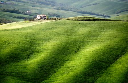 ヴァル ・ ドルチャ、トスカーナ、イタリア。フォア グラウンドでラインに立ってのヒノキの木と孤独な農家。