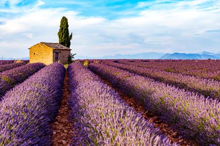 プロヴァンス、ニースの高原、フランス、ヨーロッパ。満開のラベンダー畑、サンバーストと日の出で孤独な農家とサイプレス ツリー。 写真素材