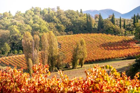 Sagrantino di Montefalco Vineyards in autumn, scenic landscape. Umbria, Italy