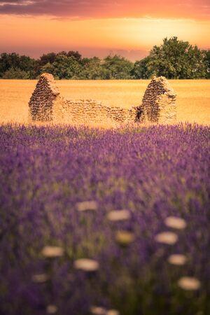 Lavender Field at sunrise Imagens