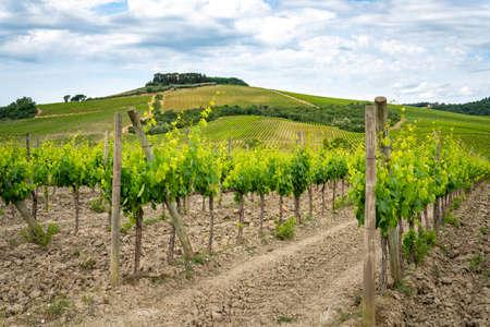 Chianti region, Tuscany. Vineyards and cloudy blue sky. Italy