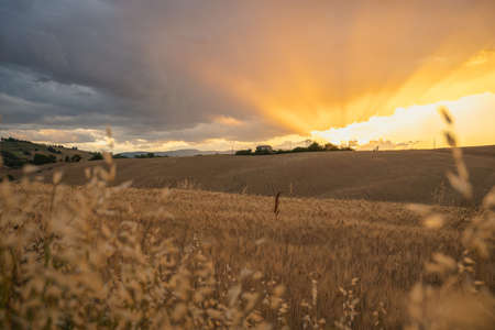 Marche Region, Italy. Rural landscape at sunset. Meadow