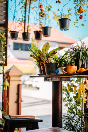 Decoration of a Restaurant in Chiang Mai. Beautiful green plants everywhere Stock Photo