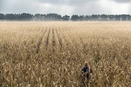 cleared: a man standing alone in a field of corn. It is a magical moment where the fog cleared and a few rays of sunlight paved the way through the clouds.