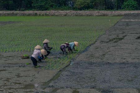 tucker: farmer on the ricefeld