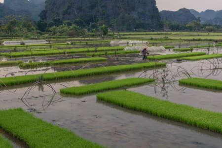 tucker: Farmer on the ricefield