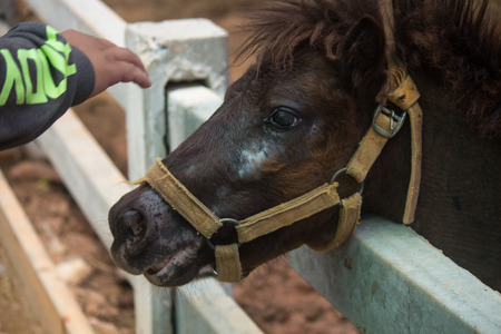 tinker: The dwarf horse in stables