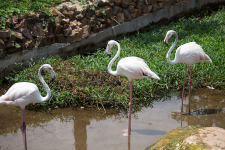 Group of flamingos in zoo Stock Photo