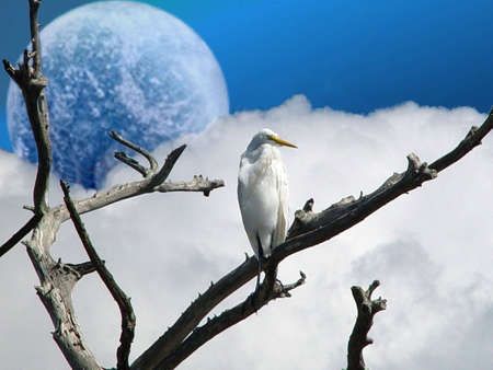 A perched White Egret With a day lit moon sky