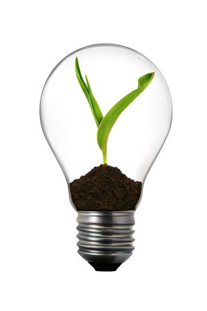 Renewable energy: light bulb with green plant inside photo