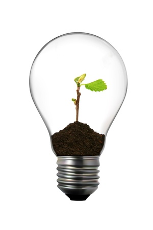 ecological problem: Renewable energy: light bulb with green plant inside