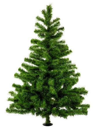 arbol de pino: �rbol de Navidad