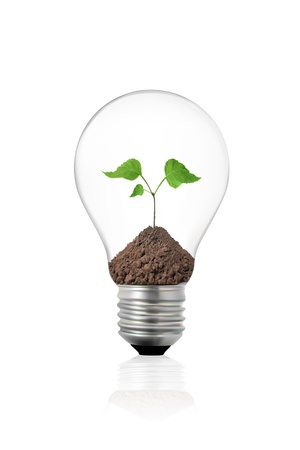 Eco concept: light bulb with green plant inside Stock Photo - 11350869