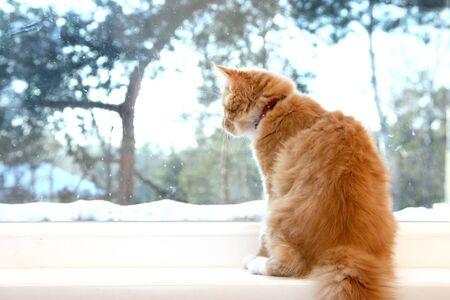 windowsill: cat look through the window Stock Photo