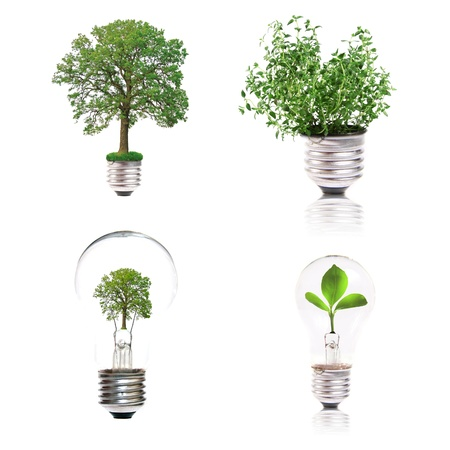 Eco concept: variety of light bulbs with plant inside