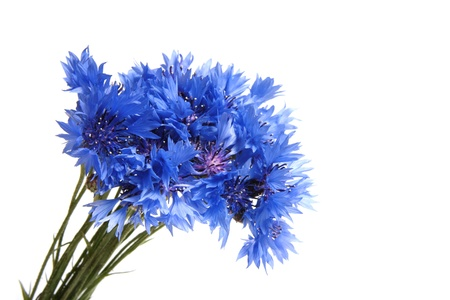 Bunch of cornflowers photo