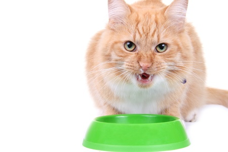 Brown kitten eating forage photo