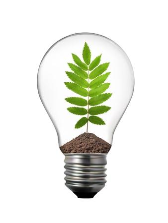 eco concept - lightbulb with rowan leaf inside photo