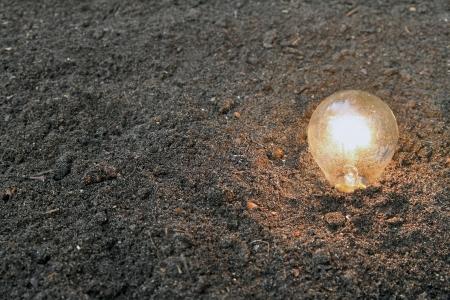 renewable energy - light bulb planted in soil photo