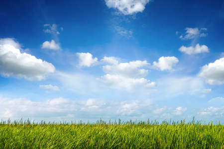 field of green fresh grass under blue sky photo