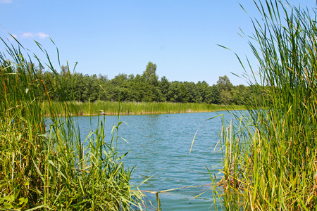 pond and water plants at summer day photo