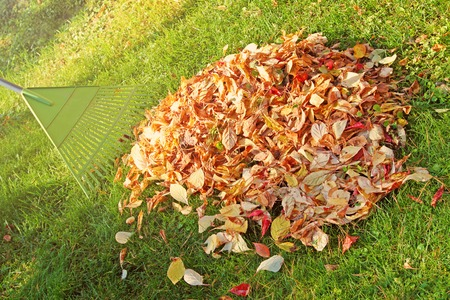 pile of fall leaves with fan rake on lawn photo