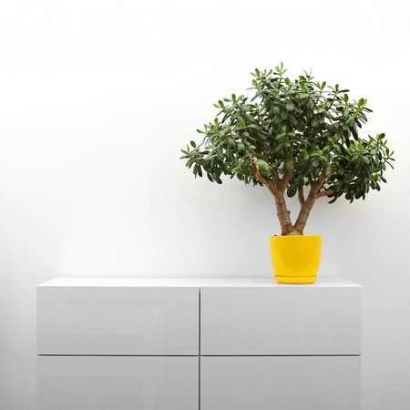 crassula plant on white commode in minimalism interior photo