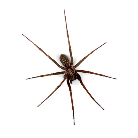 arachnophobia: spider isolated on white, top view Stock Photo