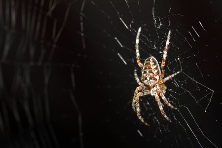 arachnids: macro shot of spider in web Stock Photo