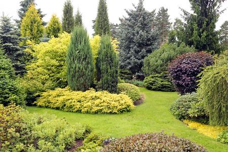 針葉樹と他の植物の様々 な美しい庭園の風景