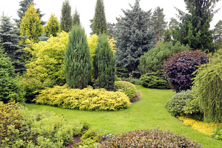 beautiful garden landscape with variety of conifers and other plants Stock Photo