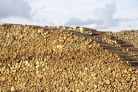 huge stack of logs against cloudy sky at lumber yard Stock Photo