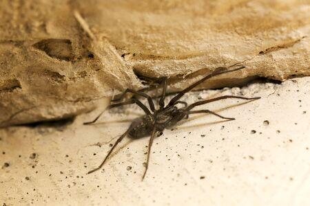 huge: spider