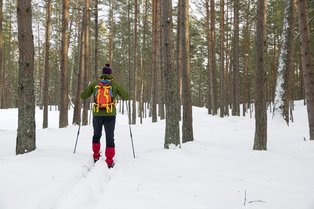 backcountry: backcountry skier in snowy forest