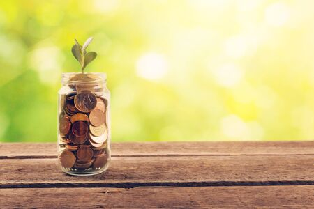 financial saving concept - plant growing out of coins Stock Photo