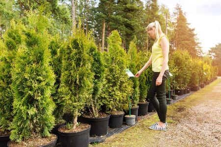 thuja: woman choosing thuja tree at outdoor plant nursery