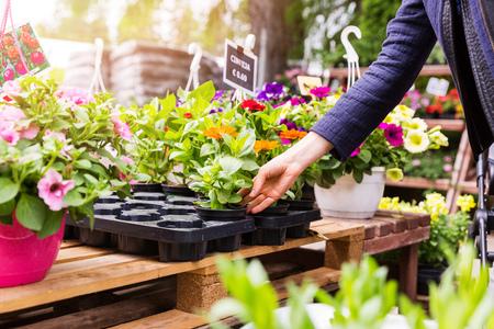 plant pots: woman chooses flower pots at garden plant nursery store