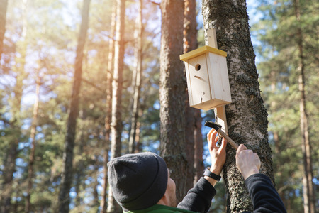 man nailing birdhouse on the tree trunk in the forest