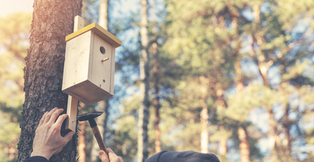 ornithologist installing birdhouse on the tree trunk