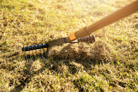 garden lawn aeration with scarifier rake