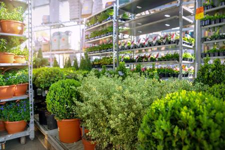 ornamental plants and flowers in garden supermarket