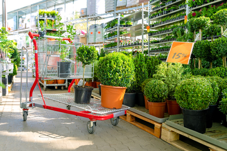shopping cart with plants at ornamental garden plants store Stock Photo